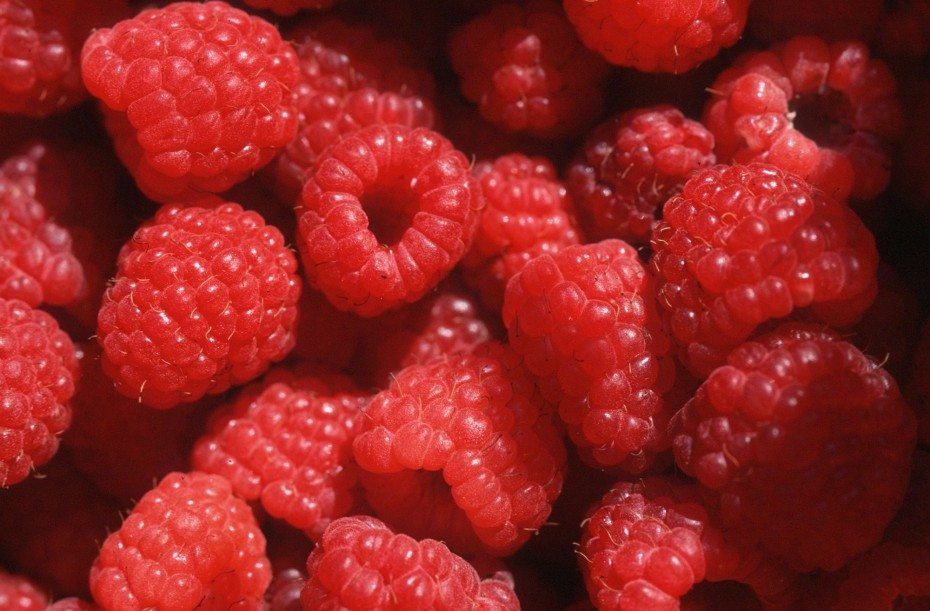 Fresh ripen raspberries
