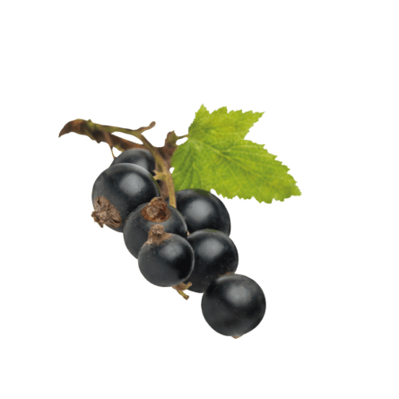 Gin, Ribisel, Ribisellikör, Likör, schwarze Johannisbeere, Gölles, Rigersburg